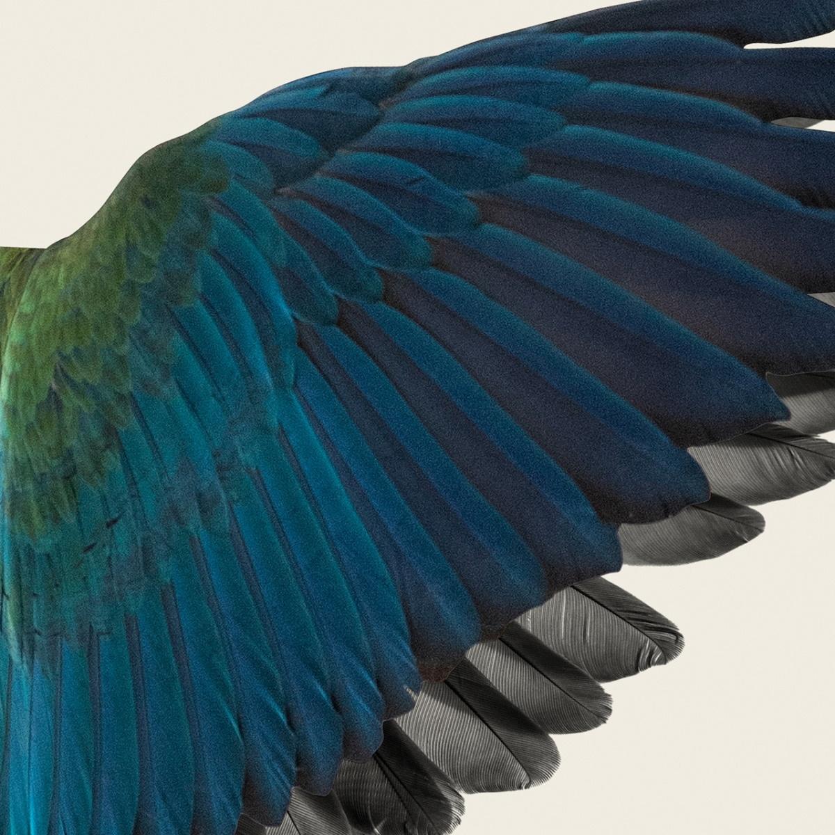 『BBHF - 黒い翼の間を』収録の『黒い翼の間を』ジャケット