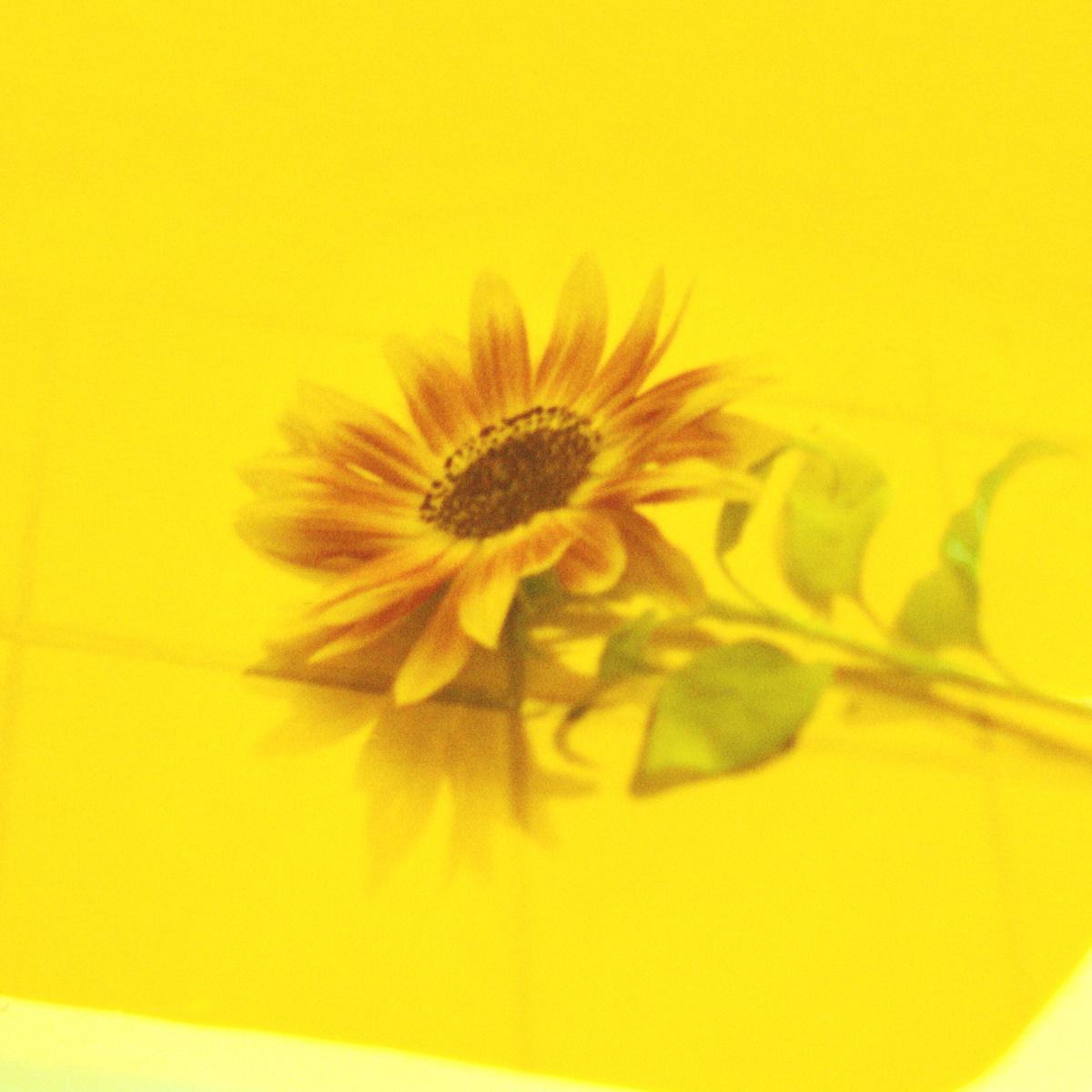 『Vaundy - 花占い』収録の『花占い』ジャケット